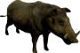 mob_level_7_boar.png