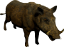 mob_level_9_dirty-boar.png