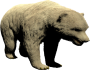 mob_level_49_polar-bear.png