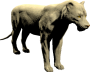 mob_level_51_white-lioness.png