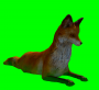 fox_atwork.png